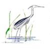 Ocean Meadows Golf Club - Public Logo