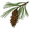 Whispering Pines Golf Club - Public Logo