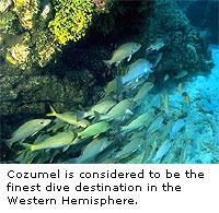 Inside Cozumel